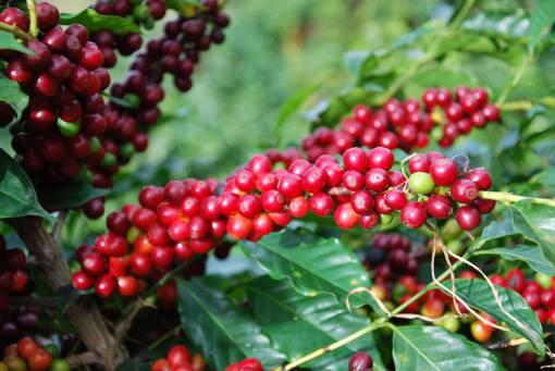 Brazil Fazenda Sao Silvestre