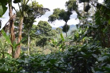 Ethiopia Waldkaffee Bonga Forest DE-ÖKO-070